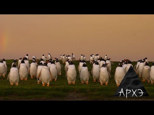 """Графика: Павел Квартальнов """"Итоги 2020 года в зоологии"""" - видео"""